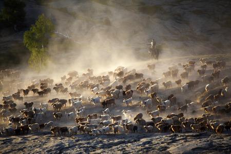 transition: shepherd  transition Stock Photo