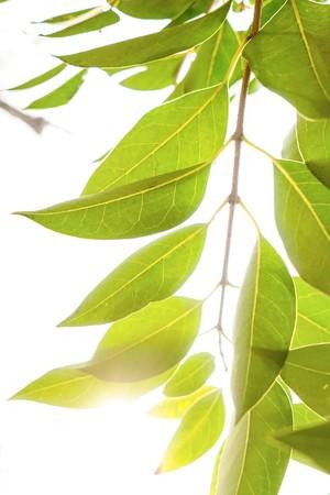 close up: leaves close up