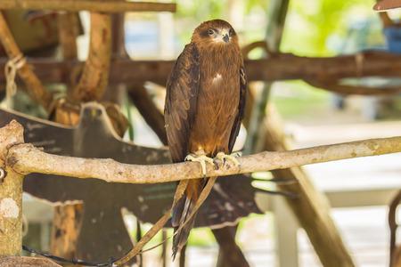 black hawk: Black Hawk