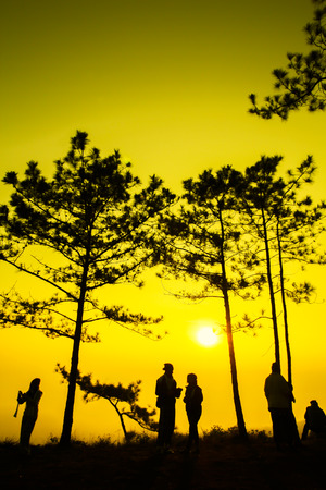 kradueng: Silhouette shot of pine tree and traveler on sunrise morning at Phu Kradueng National Park, Thailand.