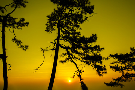 kradueng: Silhouette shot of pine tree on sunrise morning at Phu Kradueng National Park, Thailand. Stock Photo