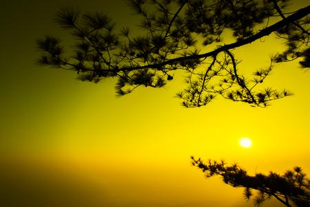 kradueng: Silhouette shot of pine tree on sunrise morning at Phu Kradueng National Park, Thailand. Stock Photo