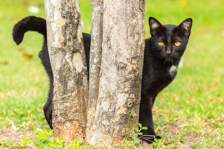 Black cat behind the tree. Archivio Fotografico