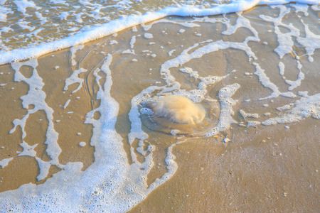 jellyfish: Jellyfish lying on a sand beach with sea wave. Stock Photo