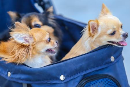 dog in shopping basket cart.