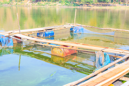 fish farm: Fish farm located at Thailand with sunshine light on the morning.