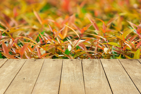 bush to grow up: Empty wooden table or plank with colorful leaves or leaf of tree bush background for product display.
