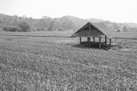 terraced field: black and white or bw image of cottage in farm or plantation
