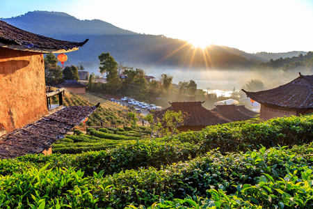 Maehongson, Thailand. - February 22, 2017 : Lee Wine or LeeWine Lodging houses among the tea plantation on the hill slope at Ban Rak Thai (Thai loving village), Mae Hong Son province, Thailand. Editoriali
