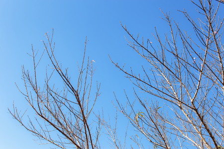 bare branch of tree with blue sky background.