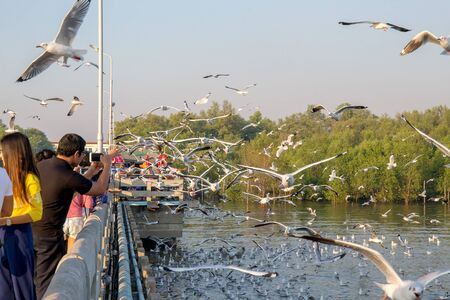 Samut Prakan, Thailand. - December 23, 2017 : People or traveller come to see seagull bird flying on sea at Bang poo, Samut Prakan, Thailand.