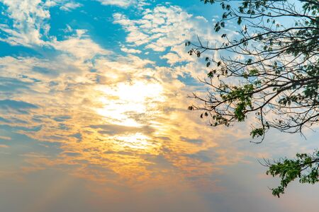 Dramatic sky of golden or yellow sunset light with blue sky and white clouds at evening time. with green tree leaf.