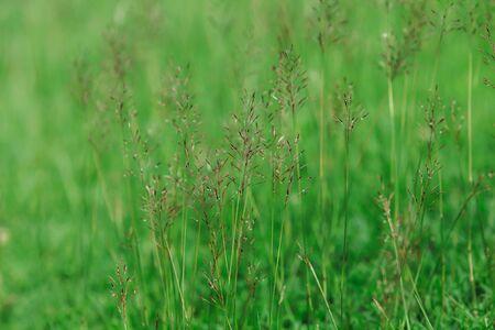 Beautiful grass flower field on the ground.