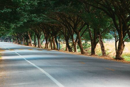 Tree tunnel on the local road of the city town.