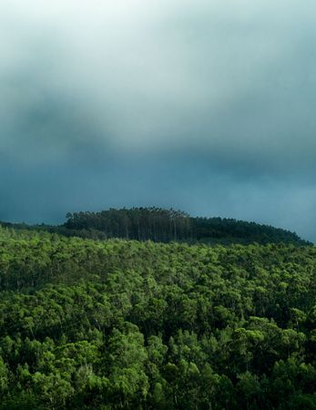 stormy weather showing the top of a mountains forest