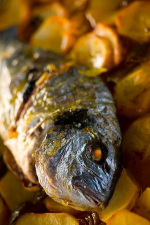 gilthead bream: gilthead bream fish roasted in a tray