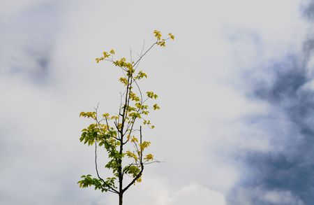 a lonely tree see from above in a cloudy day Stock Photo