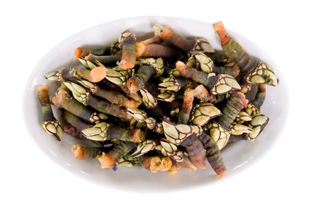 a tray with just cooked fresh barnacles