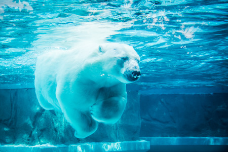 Polar bear in dream