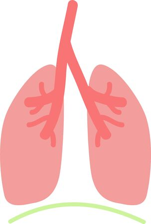 Illustration of simple lung and diaphragm internal organs  digestive system