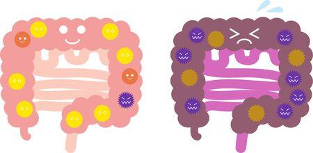 Illustration of intestinal flora