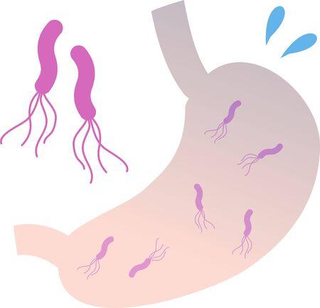 Pylori Stomach Image Illustration