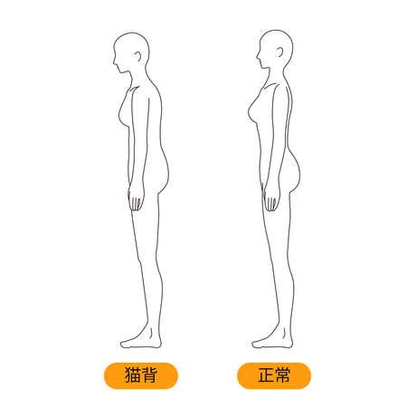 Female Medical Posture (Cat Back) Beauty Naked Nude Full Body Horizontal Vektorgrafik