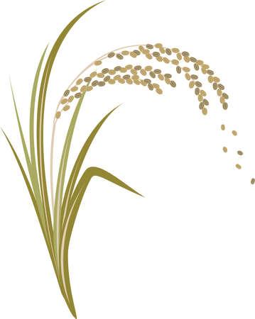 Illustration of rice