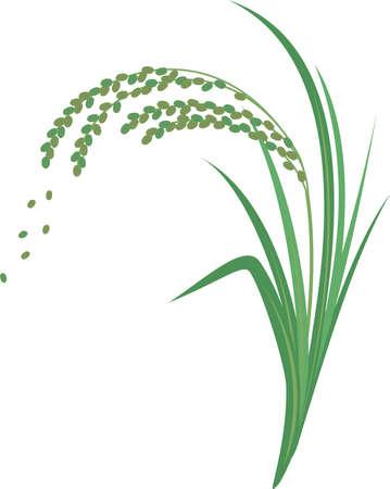 Illustration of green rice  イラスト・ベクター素材