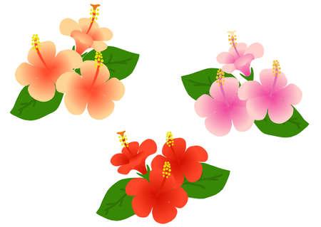 Illustration of a hibiscus  イラスト・ベクター素材