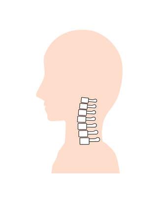 Normal neck bone image