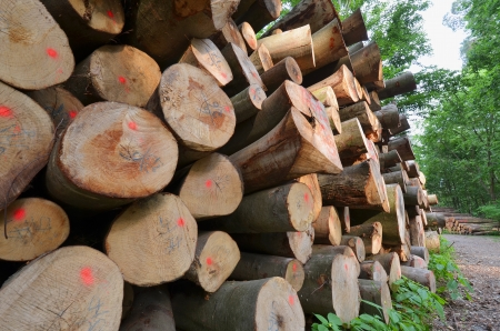 effectively: Bank Meter for wood industry At Forest Track