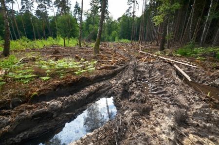 arboles secos: ranuras de carril en los suelos forestales después de trabajos forestales demaged Foto de archivo