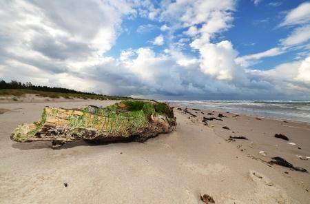 east coast: driftwood at baltic coast