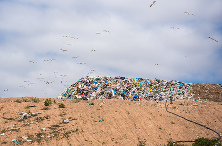 scrapheap: garbage dump with seagulls