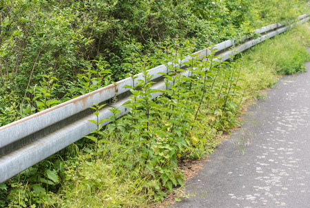 guardrail: with nettle overgrown guardrail at road