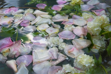 rosas blancas: Pétalos de rosas de color de rosa y flores blancas para el fondo