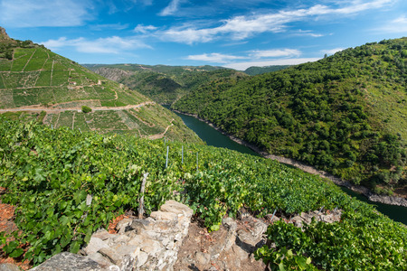 galicia: vineyards on mountains at river Sil in region Ribeira Sacra, Galicia, Spain.