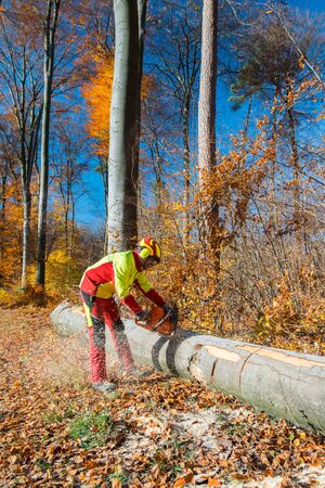 Lumberjack with chain saw during forest works