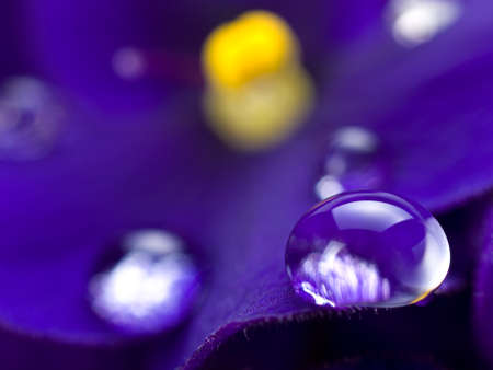 Close up of water drop on Violet. This file is cleaned, retouched and ready to use.