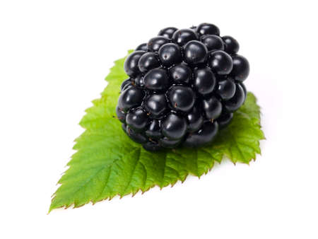 close up of blackberry on white background