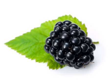 close up of blackberry on white background 免版税图像