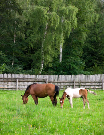 shot of couple horses eating on green pasture