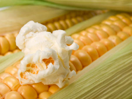 Close up of fresh corn and popcorn. This file is cleaned, retouched and is ready to use. Zdjęcie Seryjne