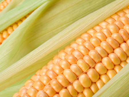 Close up of corn. This file is cleaned, retouched and is ready to use.