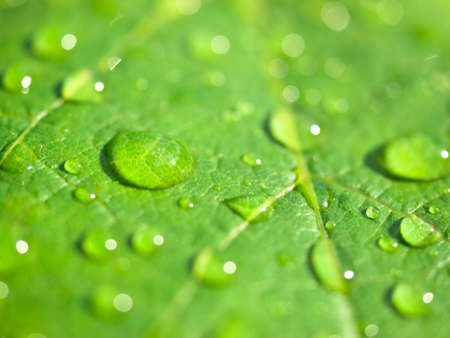close up of water drops on the green leaf