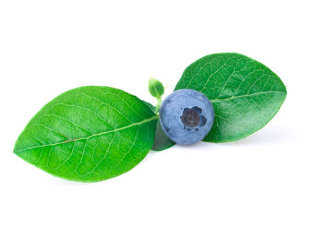 blue berry with leaf on the white background