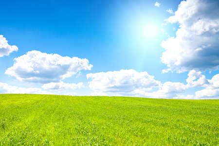 Shot of green field with sun on blue sky. This file is cleaned and retouched.