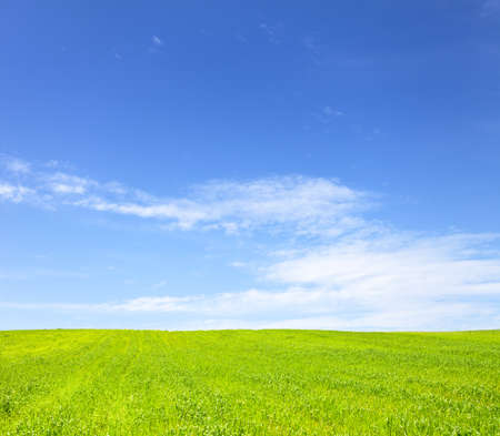 Shot of green field with blue sky. This file is cleaned and retouched.