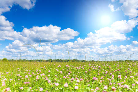 Shot of peaceful meadow with sun on blue sky. This file is cleaned and retouched. 版權商用圖片